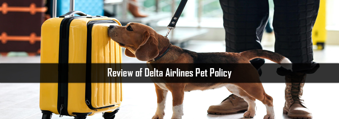 Review of Delta Airlines Pet Policy:
